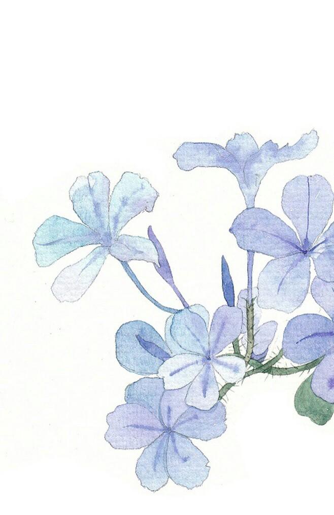 植物水彩小清新手绘海量图片合集