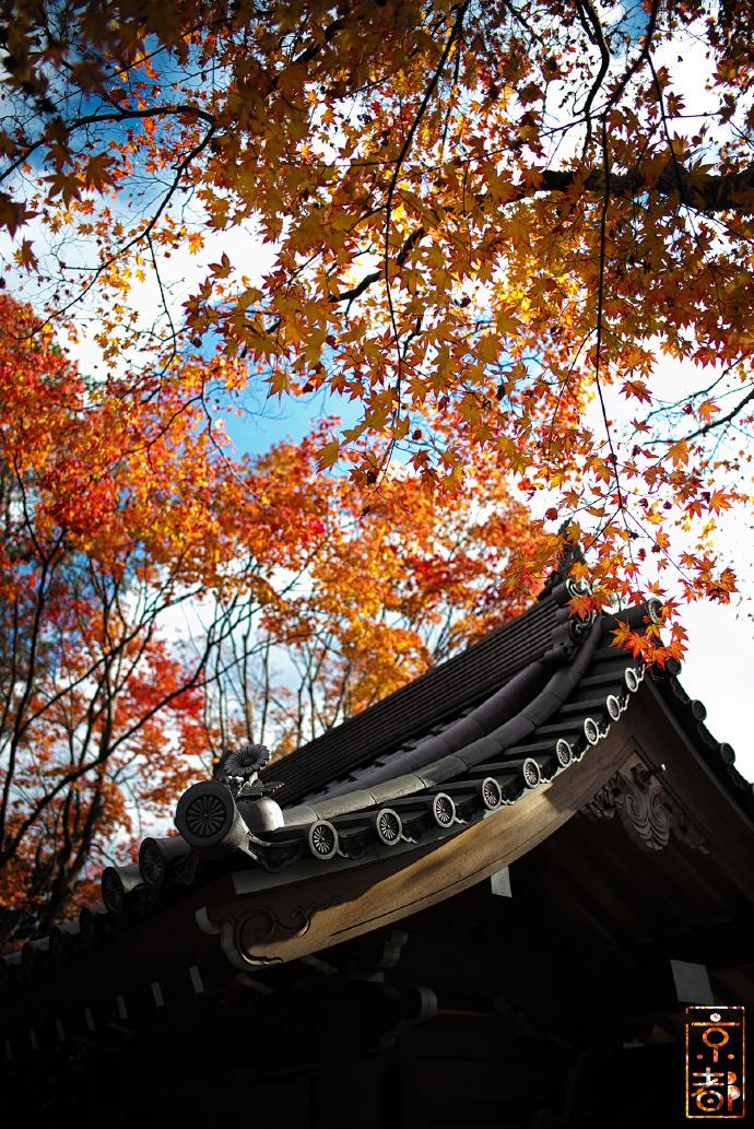 上洛记行体验京都秋色 唯美秋季风景图片