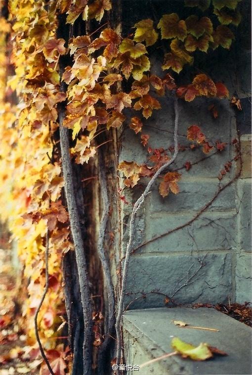 秋风落叶红色枫叶唯美意境摄影图片
