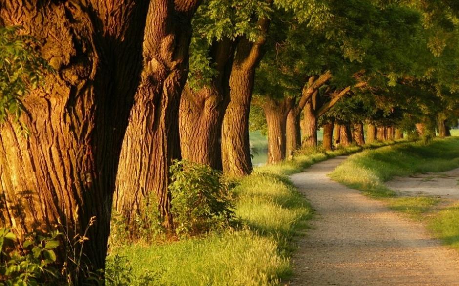 大自然森林小路风景图片壁纸