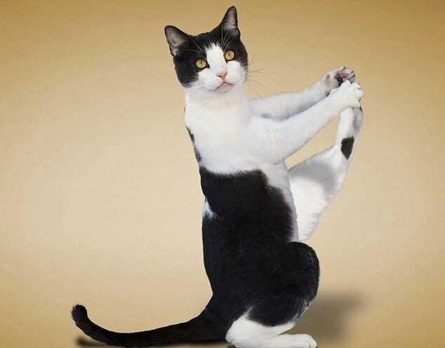 小猫生宝图片可爱