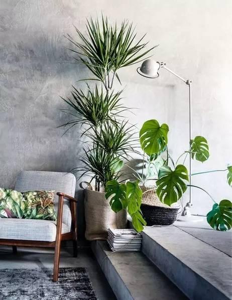 北欧风格室内常见的植物有琴叶榕,散尾竹,橡皮树,无花果树,橄榄树