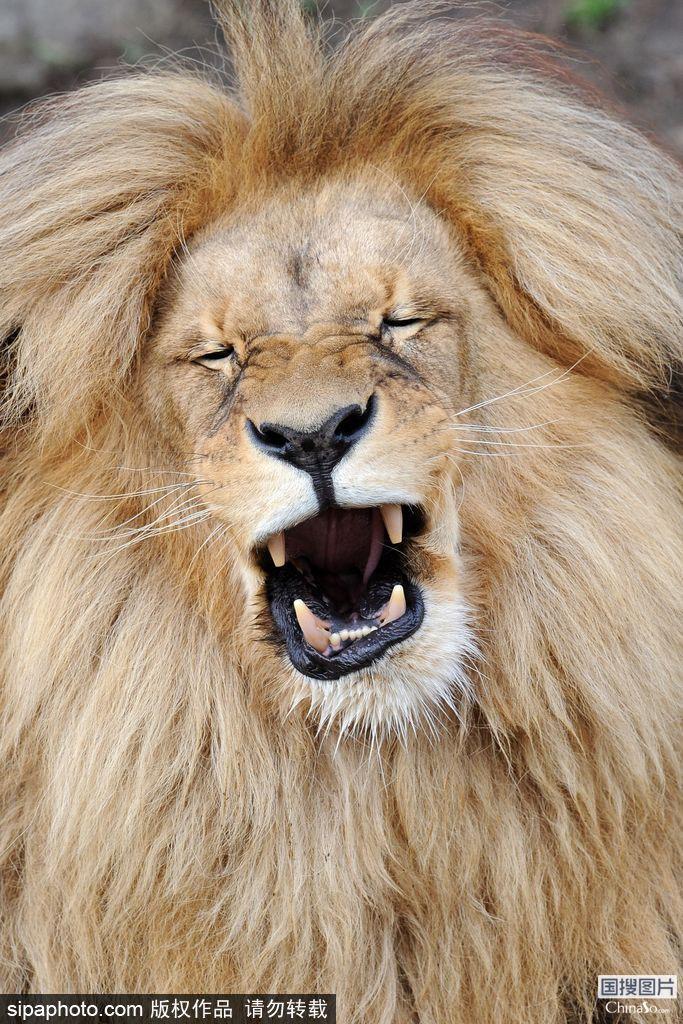 超搞笑蠢萌动物 挑战你的笑神经_图片新闻_东方头条