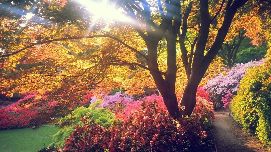 自然田园风光图片 大自然唯美绿色田园风光图片电脑桌面壁纸下载