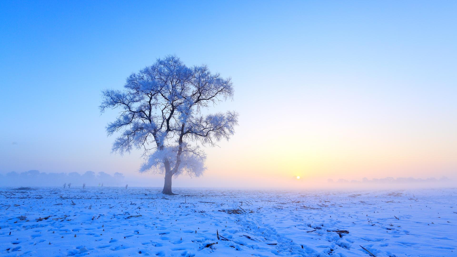 唯美雪景壁纸 高清 冬季唯美风景雪景高清桌面壁纸