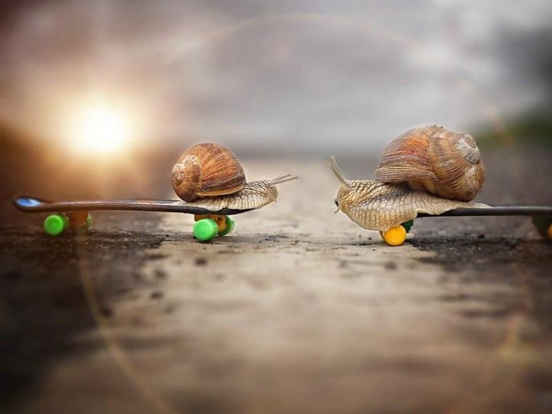 ipad风景壁纸蜗牛唯美图片