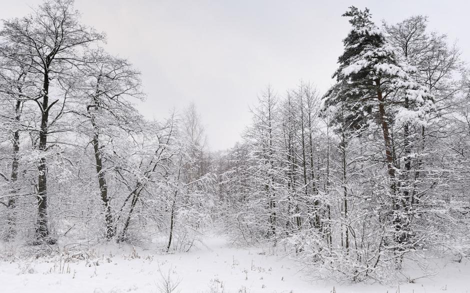 森林雪景图片大全 森林美丽的雪景图片高清