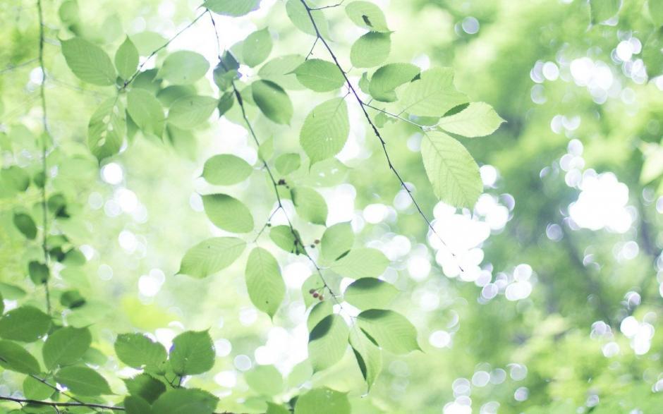 小清新绿色护眼叶子风景桌面壁纸
