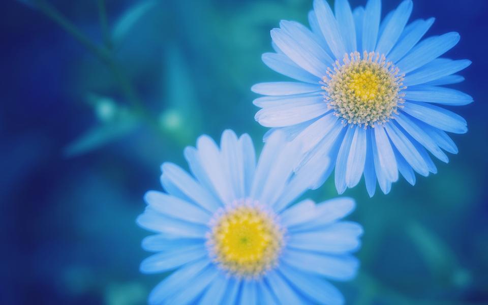 唯美花卉意境壁纸