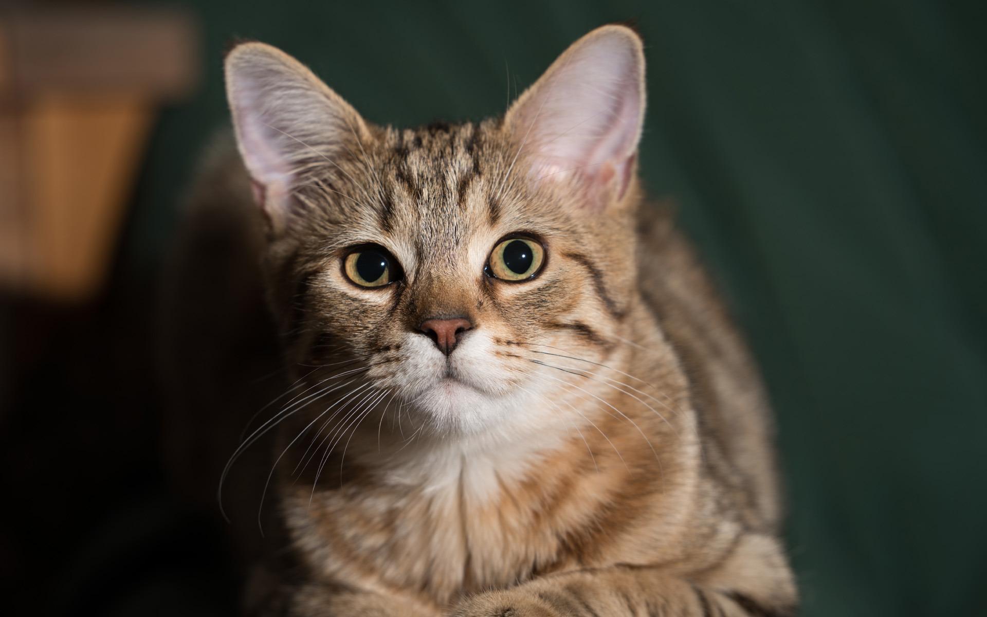 壁纸 动物 猫 猫咪 小猫 桌面 1920_1200