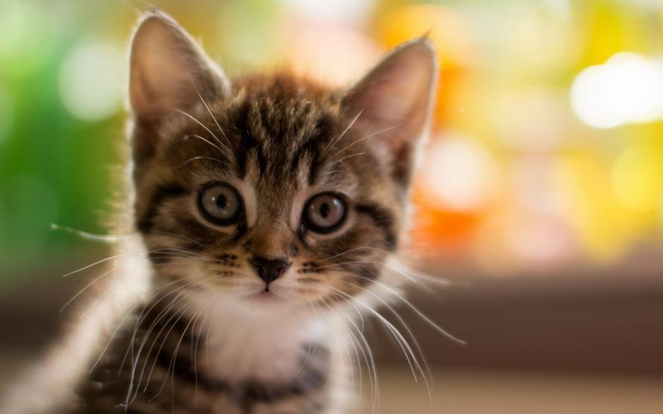 可爱呆萌猫咪高清壁纸