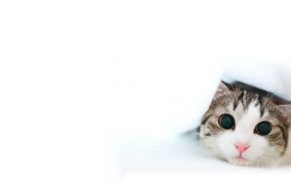 可爱呆萌猫咪高清壁纸_图片新闻_东方头条