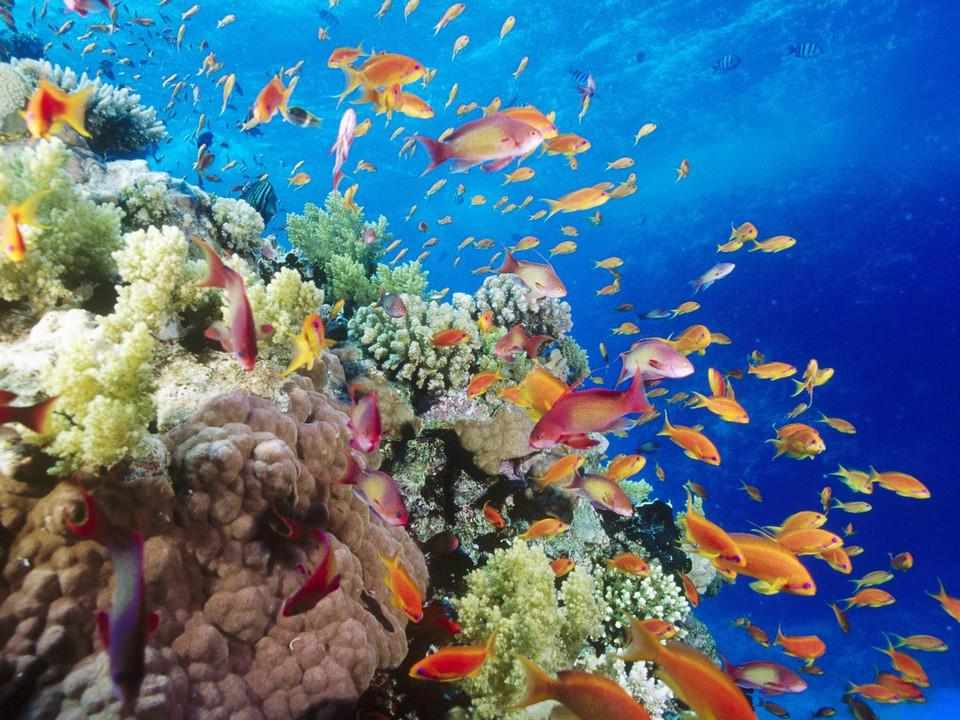 热带海底高清壁纸