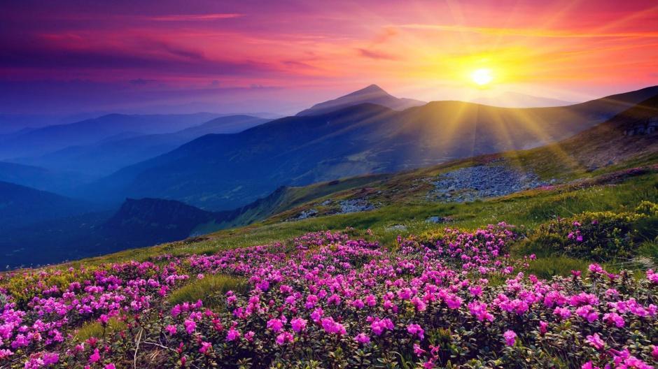 唯美花海自然风景图片欣赏