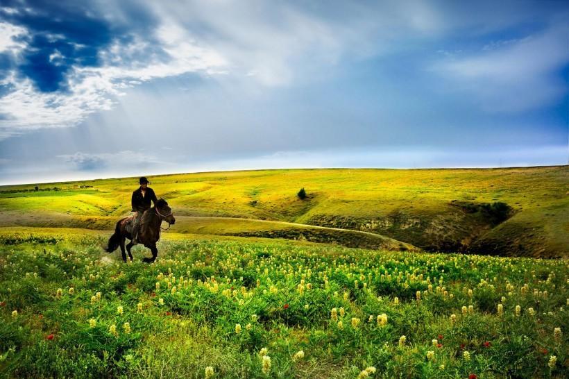 春天的草原风景图片