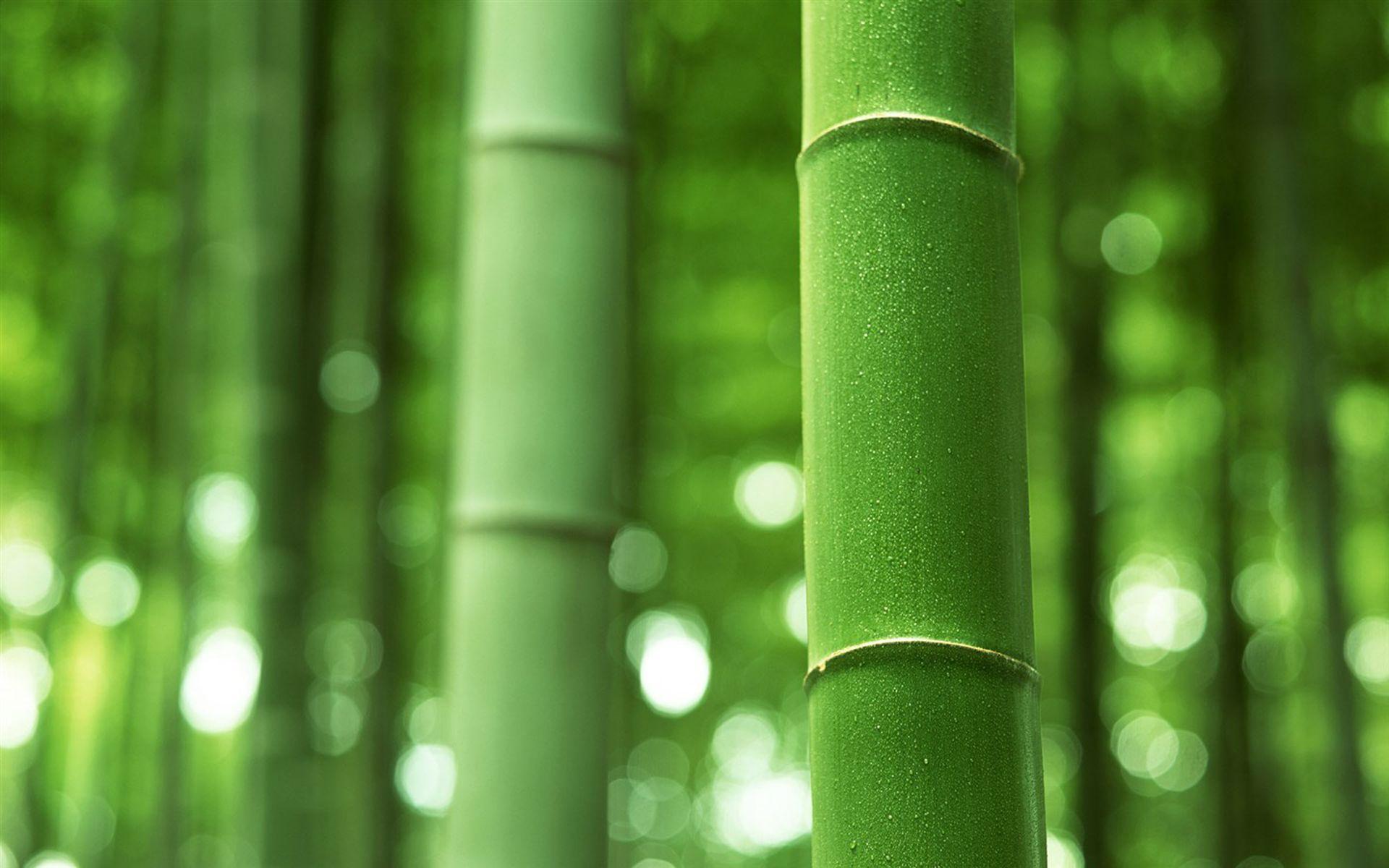 高清绿色风景桌面壁纸图片