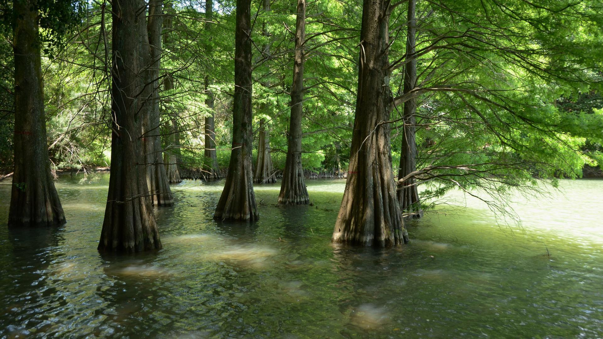 綠色自然風景圖片高清寬屏桌面壁紙