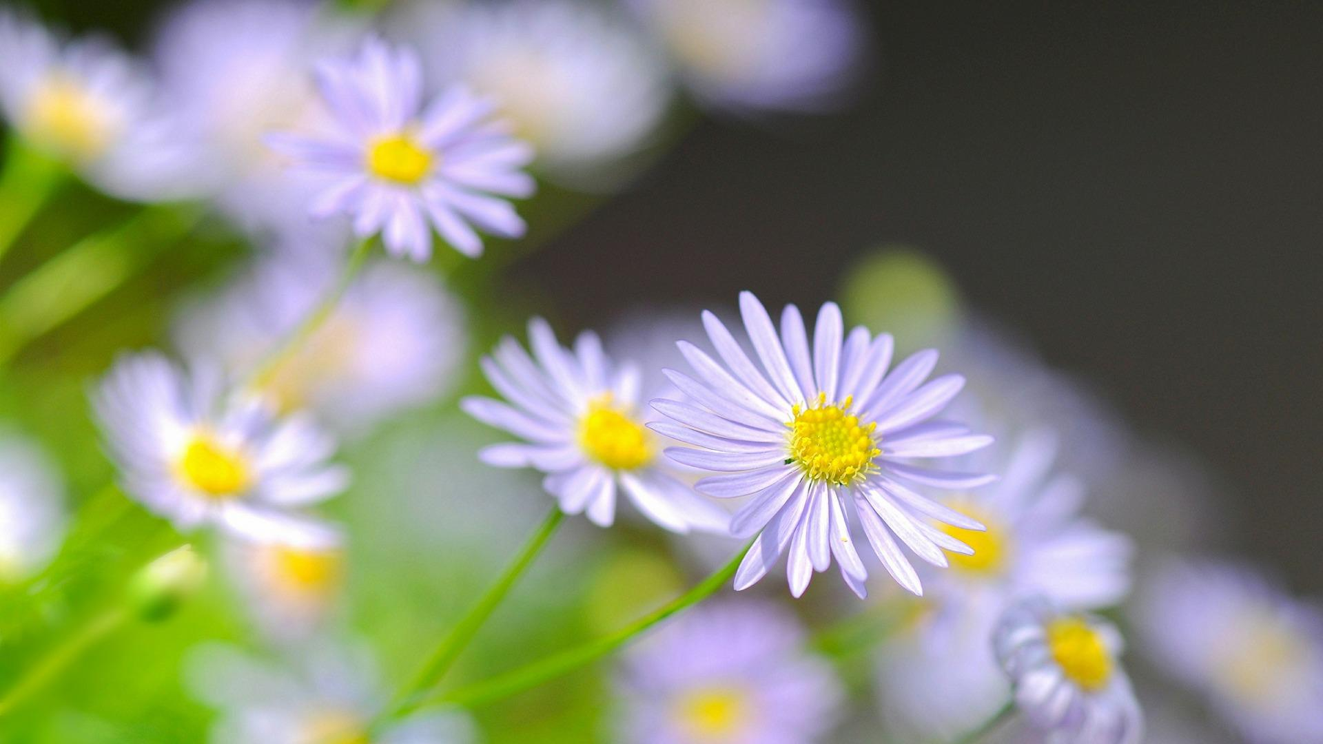 清新植物花卉摄影高清宽屏壁纸图片