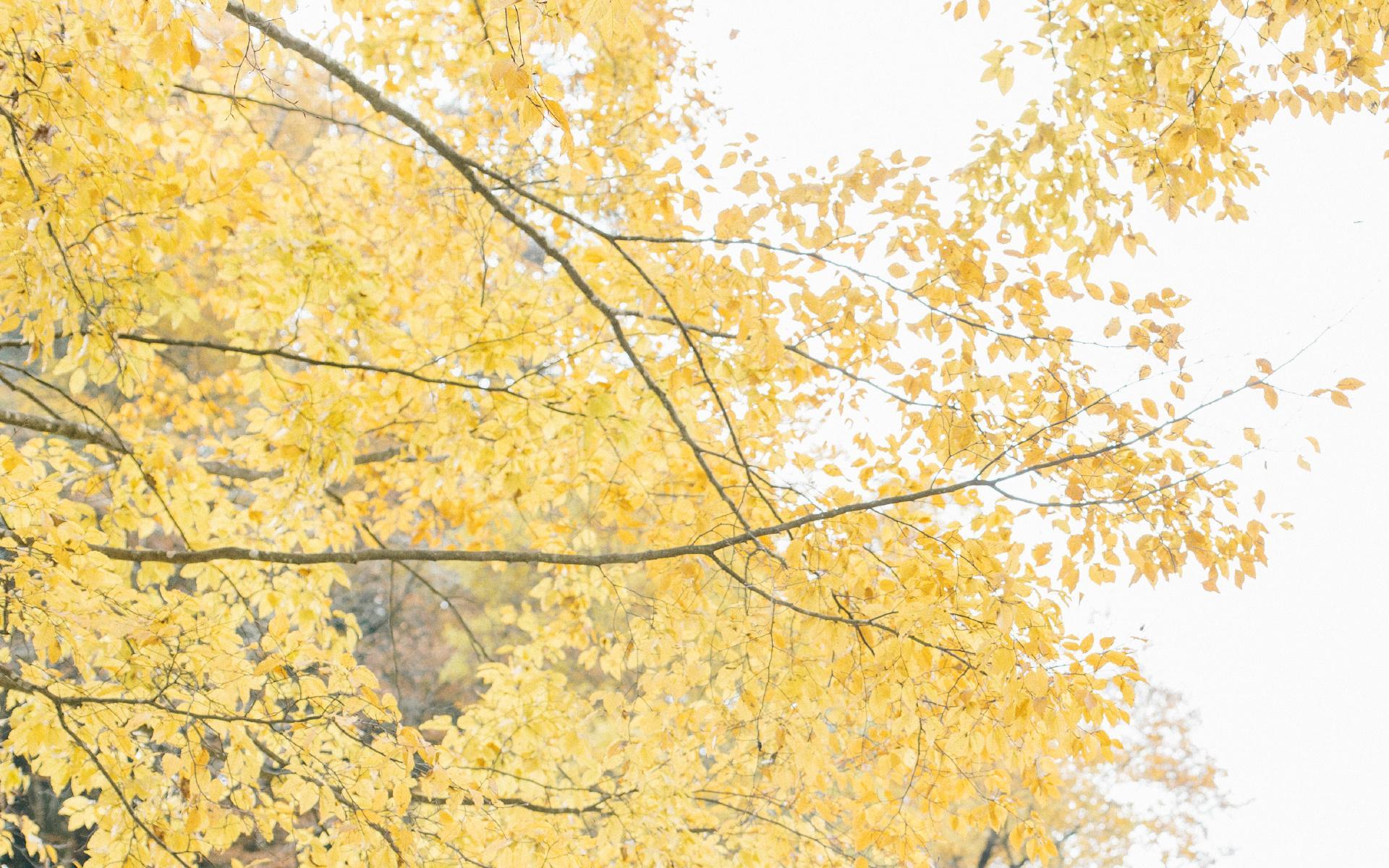 初秋優美自然風景高清圖片桌面壁紙