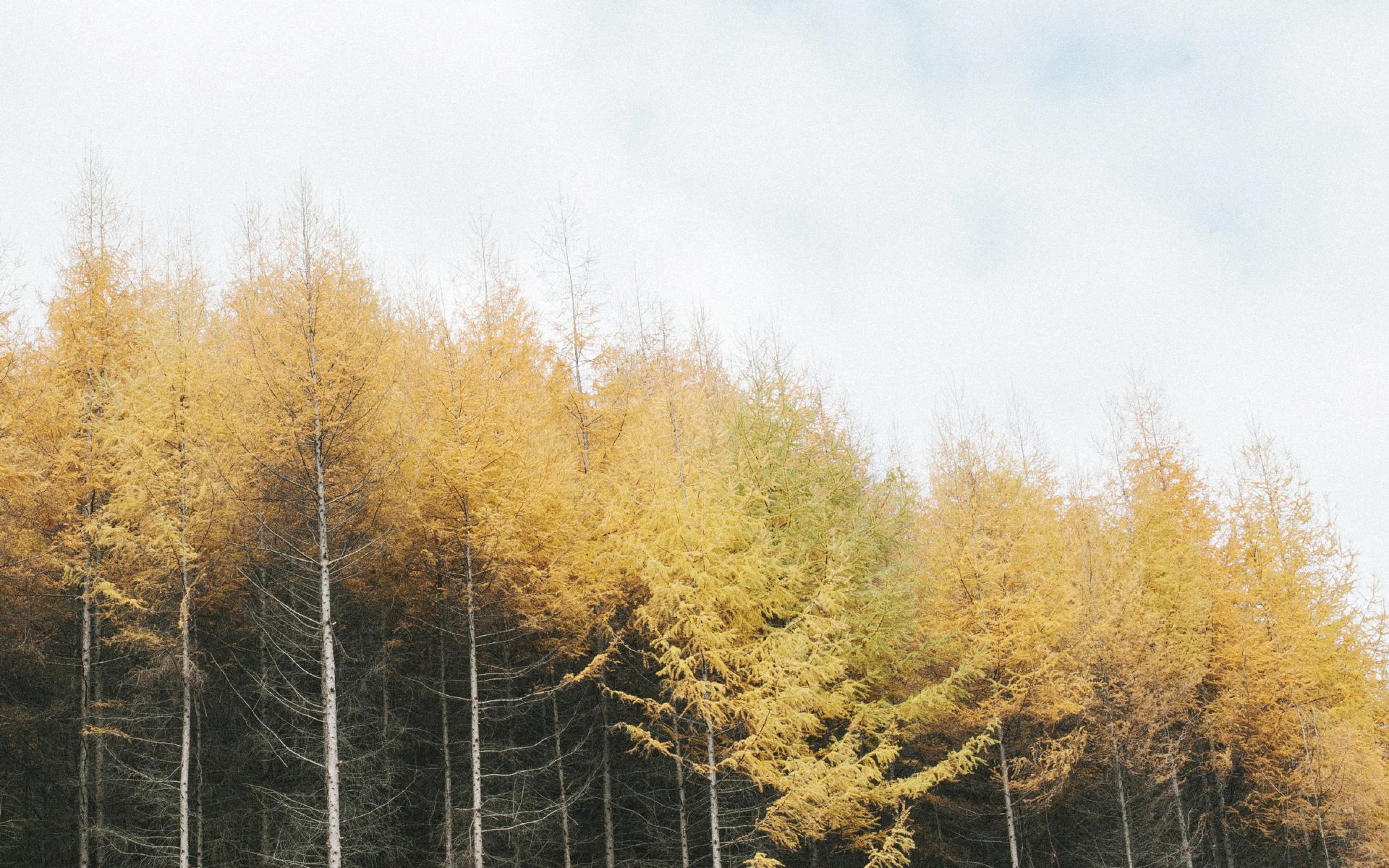 初秋优美自然风景高清图片桌面壁纸