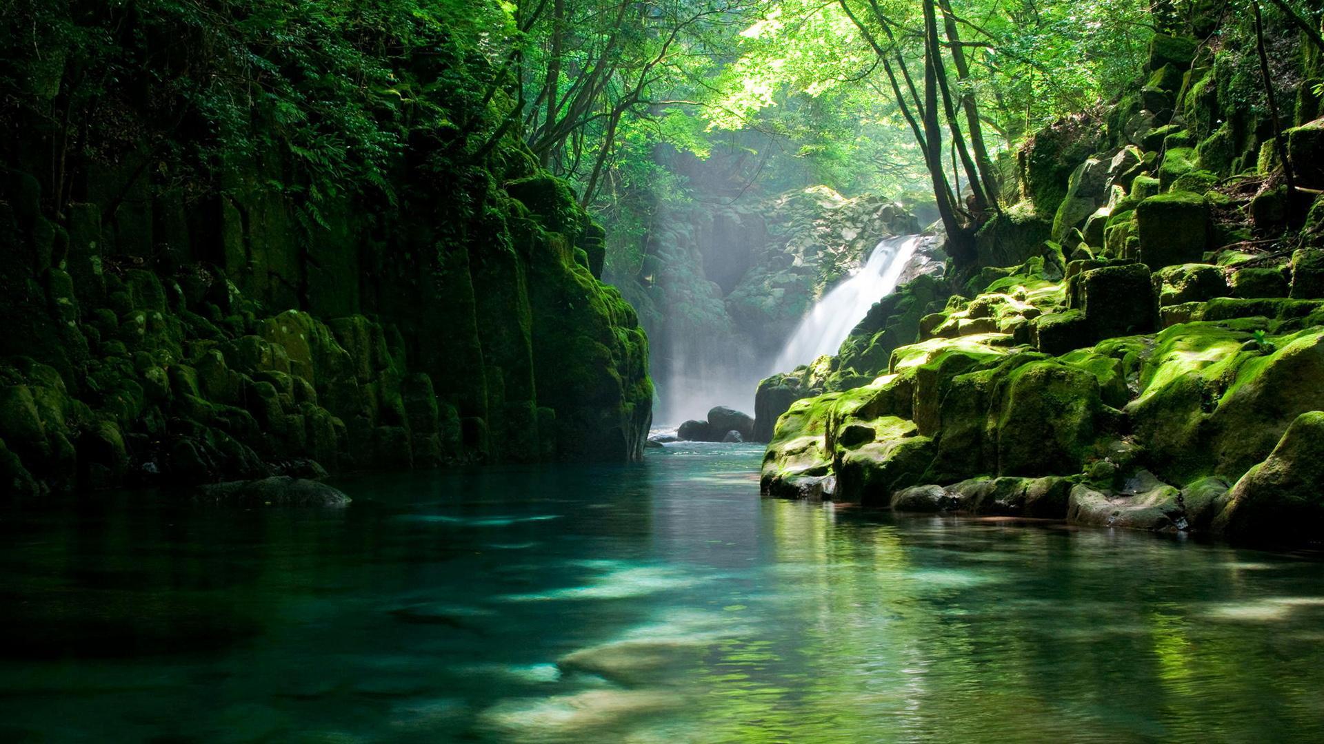 唯美清新的绿色风景图片高清宽屏桌面壁纸