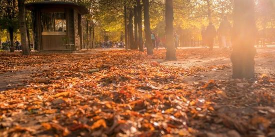 法国巴黎秋景宜人 落叶缤纷大地铺上红地毯
