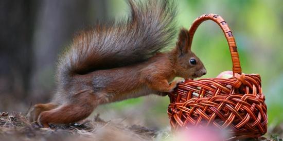 吃吃饭、聊聊天 俄摄影师抓拍松鼠和小鸟的暖心瞬间