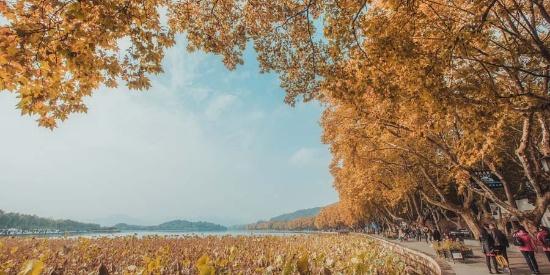 杭州西湖秋色渐浓 赏秋游客挤满北山街