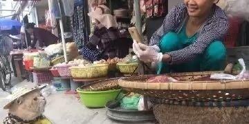 最近越南菜市一个鱼贩家的一只喵有点火啊!一副君临天下的样子!