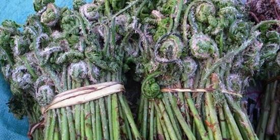 只有豪爽东北人才能吃到的山野菜,你最多认识几种,哪些你吃过?