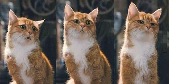 脸部表情比人类还丰富又会演的喵星人,可以报名奥斯卡了