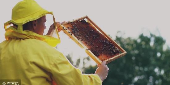 蜂蜜是蜜蜂拉的屎吗?