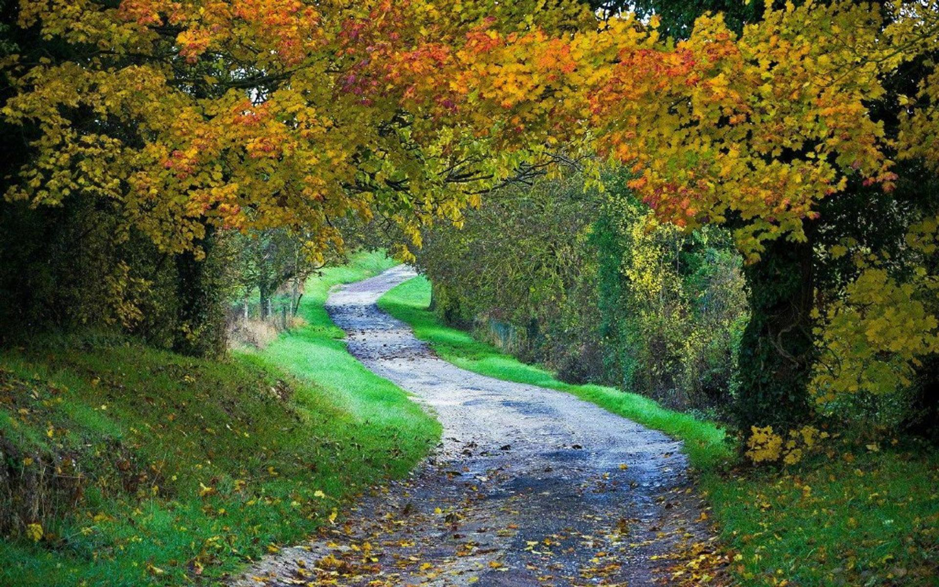 绿色护眼森林风景图片桌面壁纸