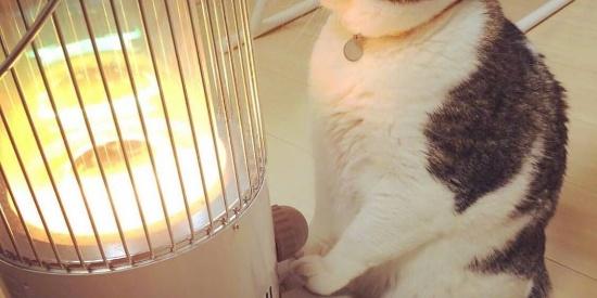 救命!我家猫冬天喜欢烤火