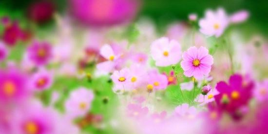 唯美花海春季风景图片壁纸
