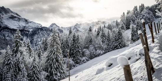 冬季白雪覆盖的森林图片