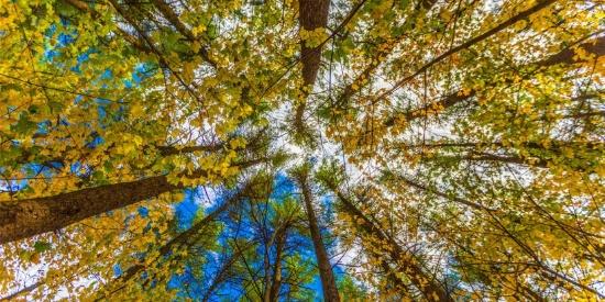 唯美而让人沉醉的秋季风景图片