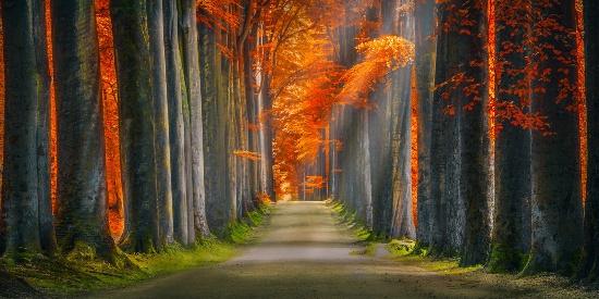 唯美养眼自然风景桌面壁纸