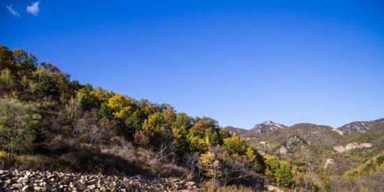 漫山遍野的金色秋景图片
