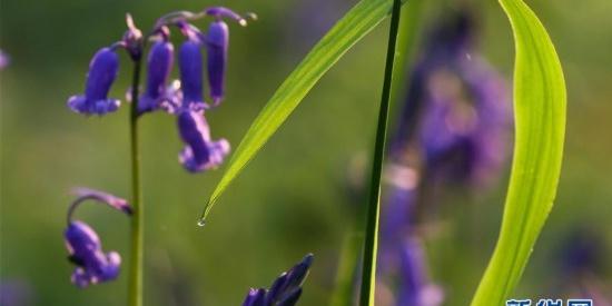 梦幻紫花森林等你来赏