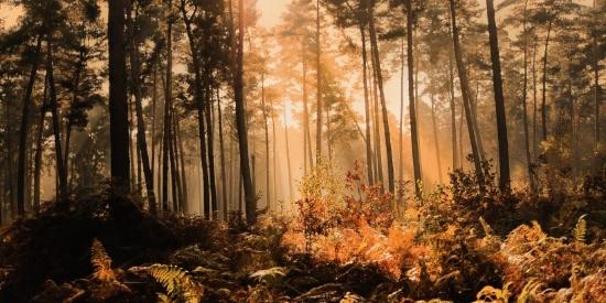 郁郁葱葱的原始森林高清风景摄影图片