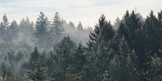 大雾天的森林图片