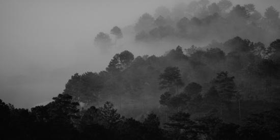 烟雾缭绕的山林图片