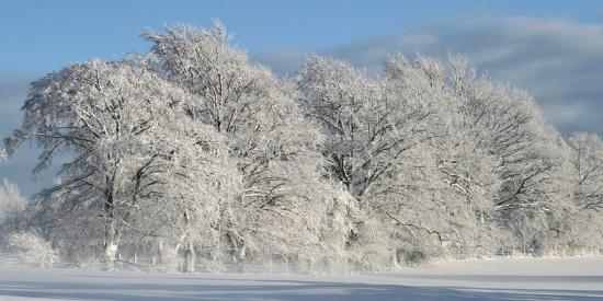 冬天唯美的雪景图片