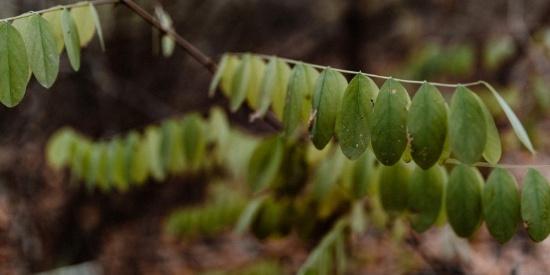 秋天森林的各个角落特写图片