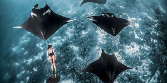 惊艳!妻子与鱼共泳 惊艳一幕被丈夫抓拍
