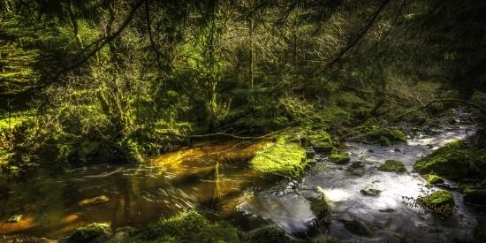 森林里的溪流图片