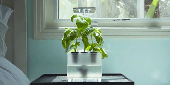 高科技FogBox雾化培植箱,不用土壤就能在家养花_图片之家