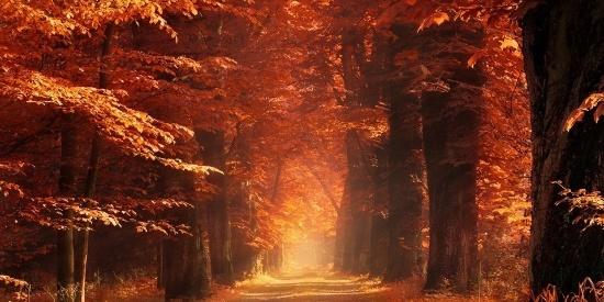 秋天黄色叶子唯美风景壁纸