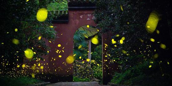 仲夏之夜南京灵谷寺流萤飞舞 如繁星点点如梦如幻